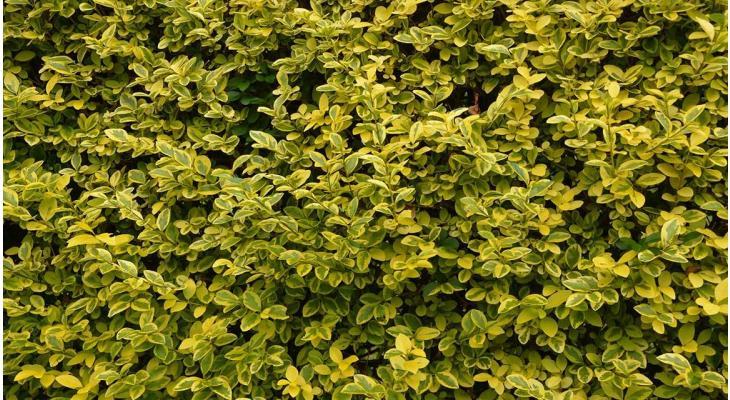 Le printemps: les plantes à feuilles caduques se réveillent