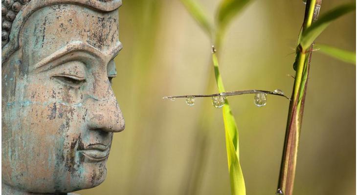 Ambiance orientale : la haie de bambous