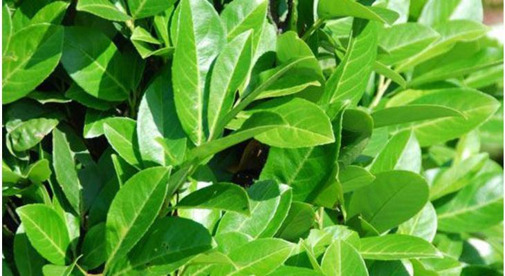 Les avantages et inconvénients des plantes en motte