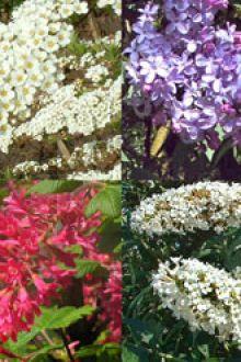 Haie pour papillons et insectes conteneur 30-60 cm