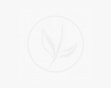 Buis - Arbustes Racines nues 30-40 cm Qualité extra