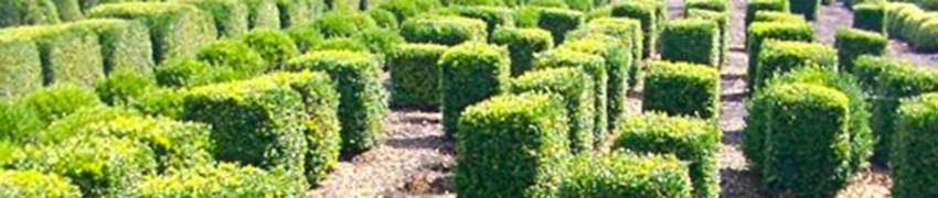 Sculptures végétalespour l'art topiaire