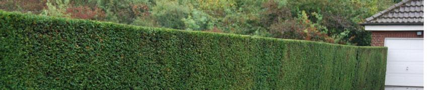 Séparation naturel de jardin
