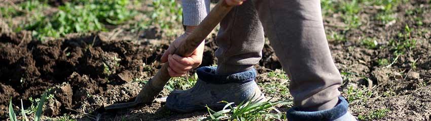 Comment planter mes arbustes