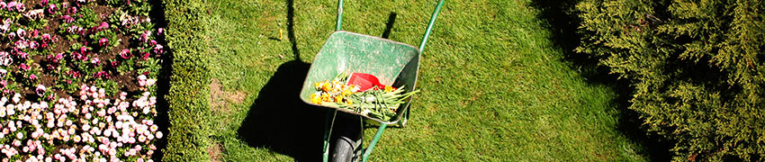 Jardin haie: planter