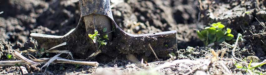 Conseils supplémentaires pour la plantation d'arbustes