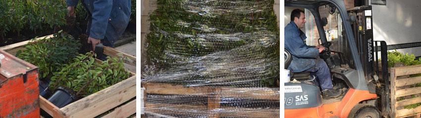 la qualité des plantes de couverture